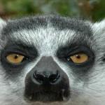 Релиз Ubuntu 13.04 Alpha 2 Raring Ringtail